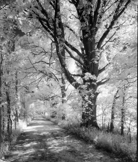 Riverbend Trail IR