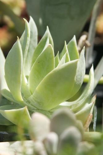 succulents  3390