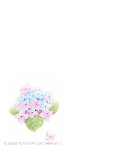 2013_06_12_hydrangea_02_s by blue_belta