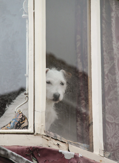Peeping doggy