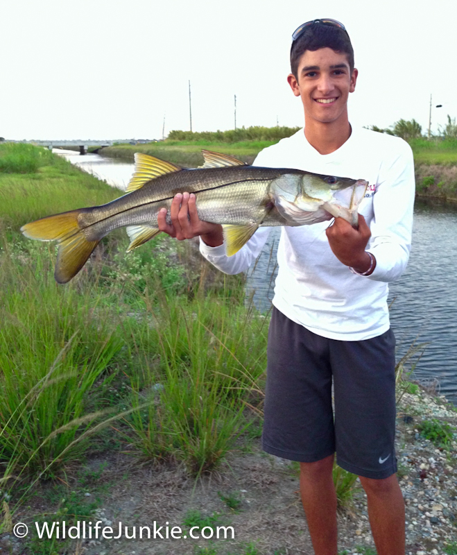 Backyard Snook