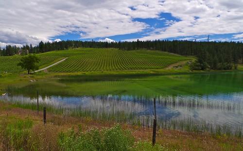 lake canada landscape vineyard vines pentax britishcolumbia okanagan winery greenlake okanaganfalls k30 seeyalaterranch smcpentaxda15mmf4edallimited nigeldawson jasbond007 copyrightnigeldawson2013