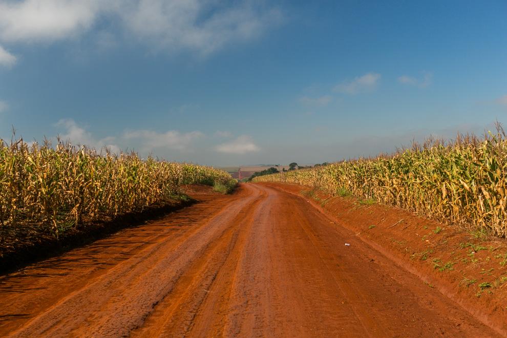Uno de los caminos que conduce a Ita Verá esta rodeado de maizales y tierra roja. (Tetsu Espósito)