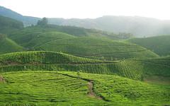 plain(0.0), paddy field(0.0), pasture(0.0), agriculture(1.0), field(1.0), soil(1.0), valley(1.0), darjeeling tea(1.0), hill(1.0), hill station(1.0), highland(1.0), plateau(1.0), terrace(1.0), landscape(1.0), vegetation(1.0), rural area(1.0), grassland(1.0), plantation(1.0),