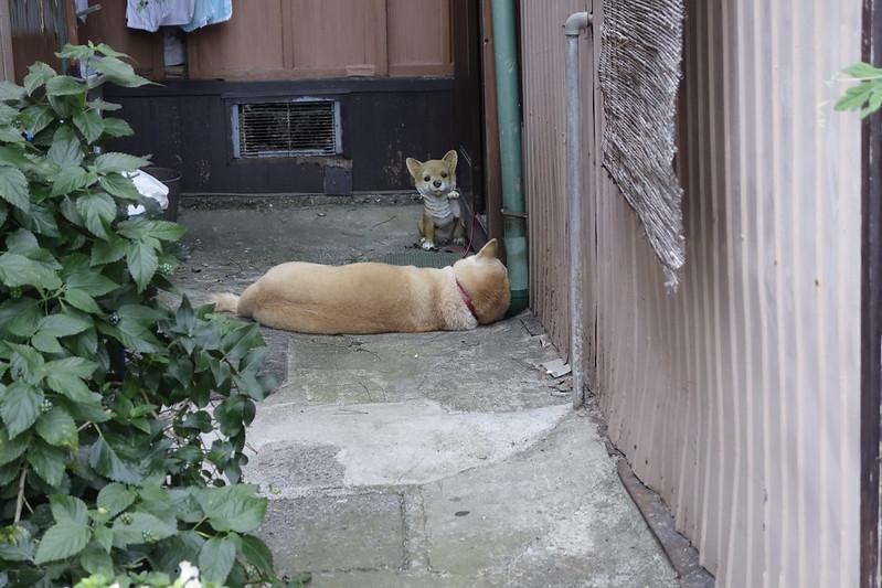 江ノ島の犬