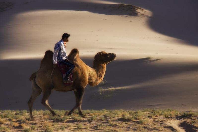 A Mongolian Nomad Rides His Camel, Gobi Desert