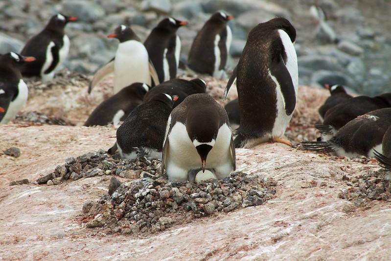 Antarctica 220 - Pleneau Island