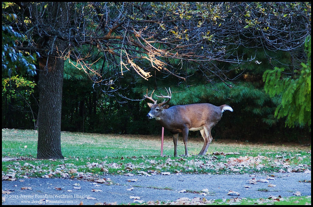 A Buck in the Park