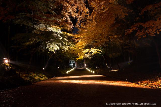 20121126-980C3123-醍醐寺