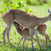 Mom and Fawn by Scott8586