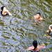 Swimming in the Raritan River, Somerset County, New Jersey by jag9889