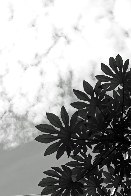 写真_天狗の羽団扇