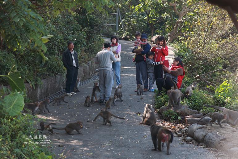 台南私藏景點-南化烏山獼猴 (7)