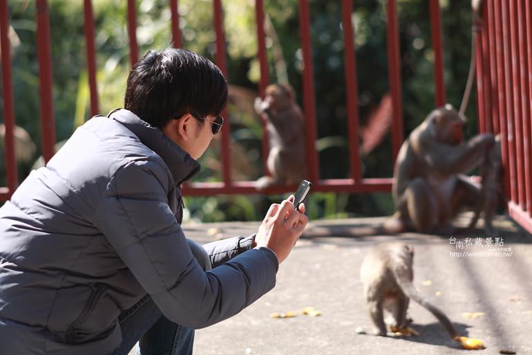 台南私藏景點-南化烏山獼猴 (3)
