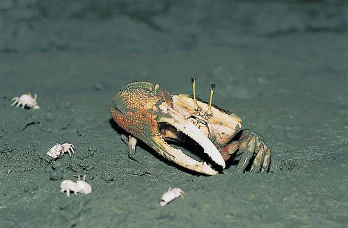 第一次拍到螃蟹的大頭照,心中的快樂難以筆墨形容