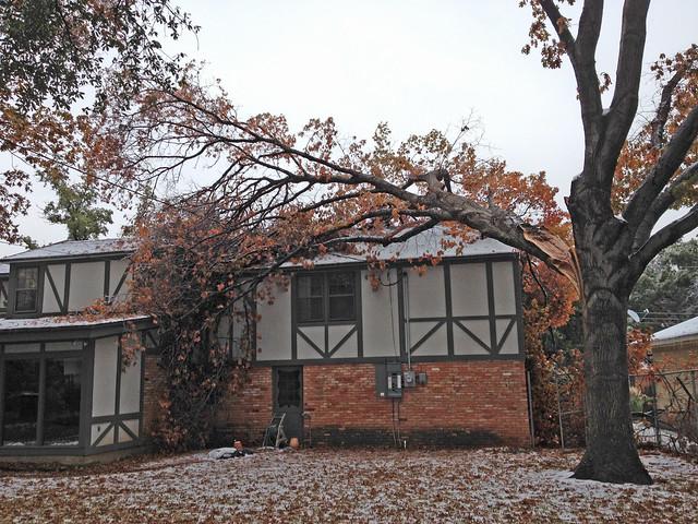Tree Roof Claim 010
