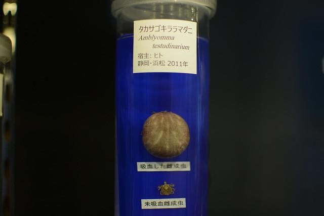 DSC_1684
