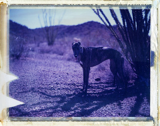 Kino at Organ Pipe National Monument, AZ