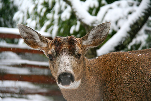 Remember The One Horned, One Eyed Deer ?