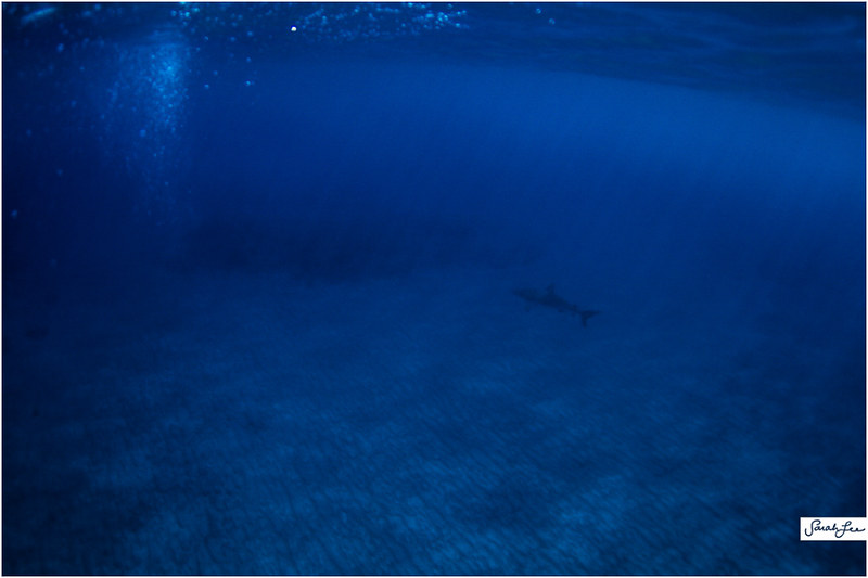 15_reef_tip_shark_shadow.jpg