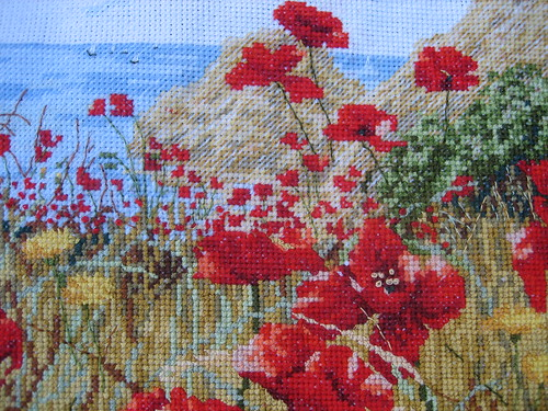 Clifftop Poppies close up
