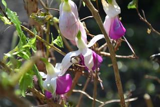 Blütenpracht im Aprilgarten