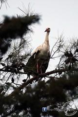 حمى عنجر قصة نجاح في حماية الطيور المهاجرة