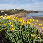 Tenby in the Spring 2017 03 09 #54
