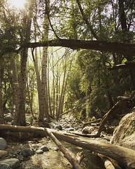 #switzerfalls #nps #california #angelesnationalforest