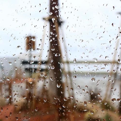 雨でした。