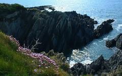 North Devon 2013