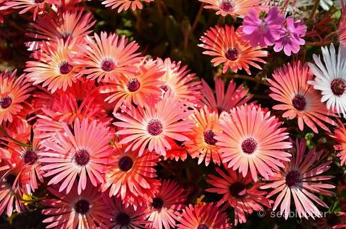 ...flower#01