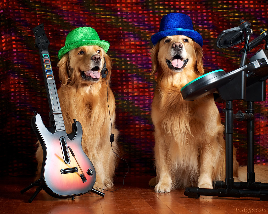 BZ Dogs Band