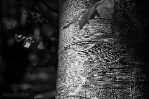 GLI OCCHI DEGLI ALBERI - The eyes of the trees