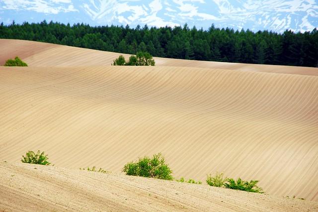 波うつ白き丘