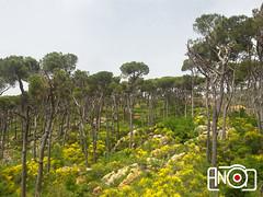 Al Shouf natural reserve - Lebanon