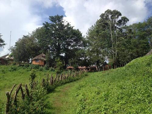 adamawaregion