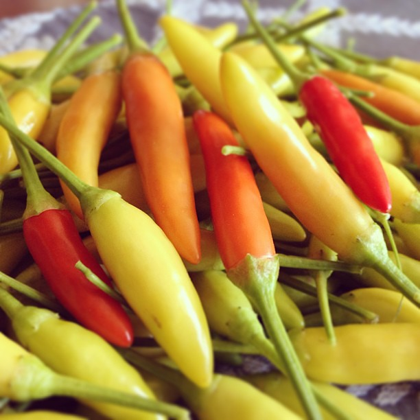 Vietnamese chili peppers.