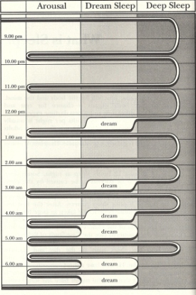 sleep_cycles_chart