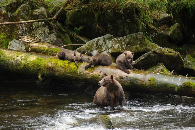 Alaska Forest Service Eden Lake Trail Hiking Baranof Island