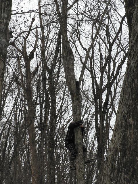 巣を発見!と同時にするすると木に登る上野先生.素早い身のこなしに参加者たちも感嘆の声.