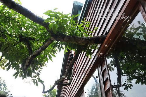 樹屋餐廳 (66)