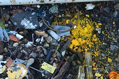 yellow, scrap, litter, waste,