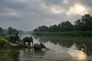 elephant---water in Assam