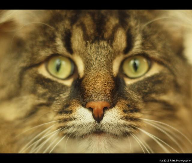 Cat's nose