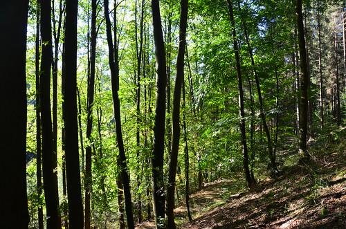 Bäume im Herbstlicht