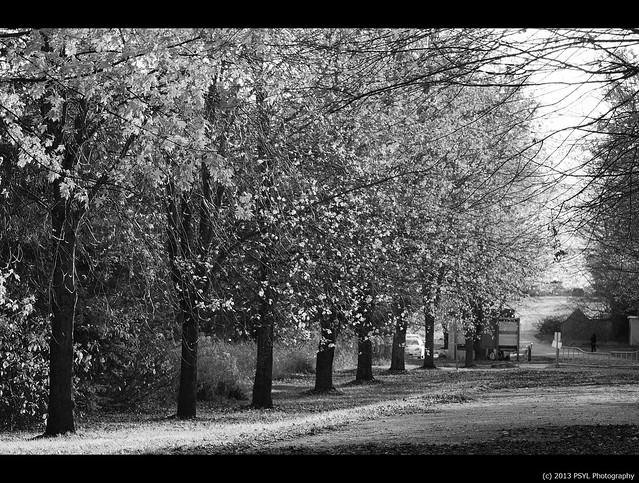 Arboretum in B&W