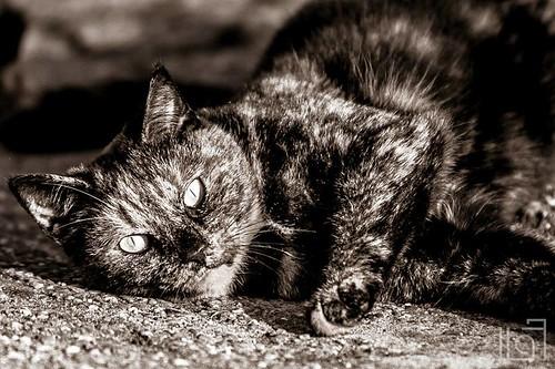 Citty cat!