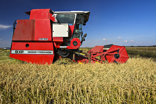 rice harvest_2013__fisher delta research center_0011