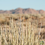 Desert Plants, Canyon Lodge - Namibia
